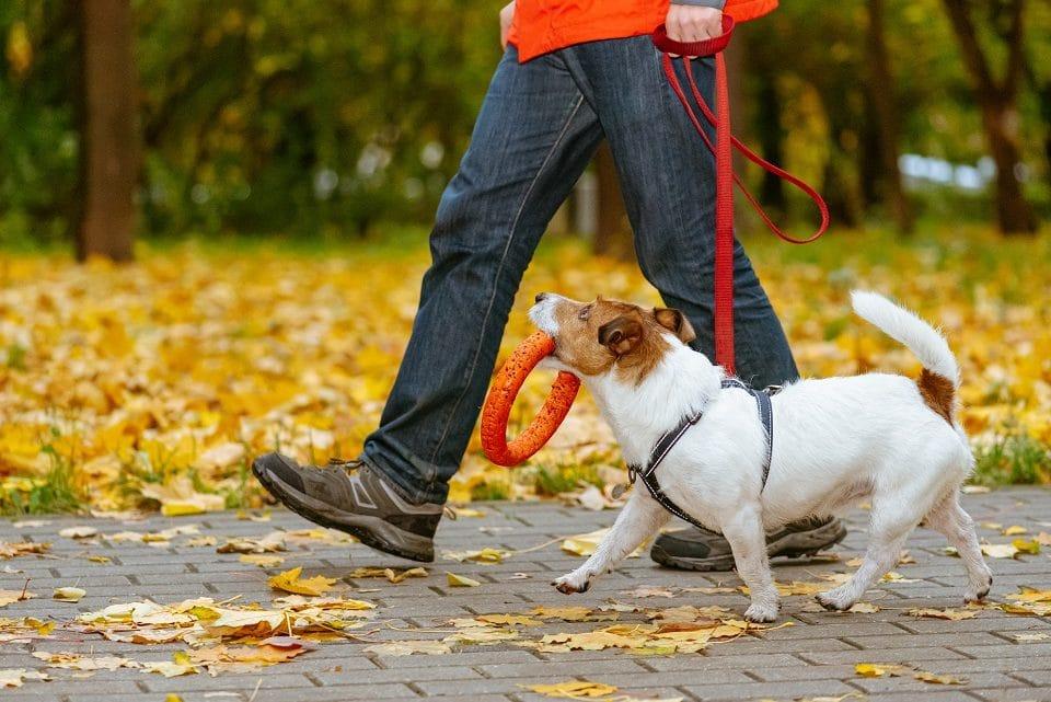 Quel est le meilleur moment pour sortir son chien ?