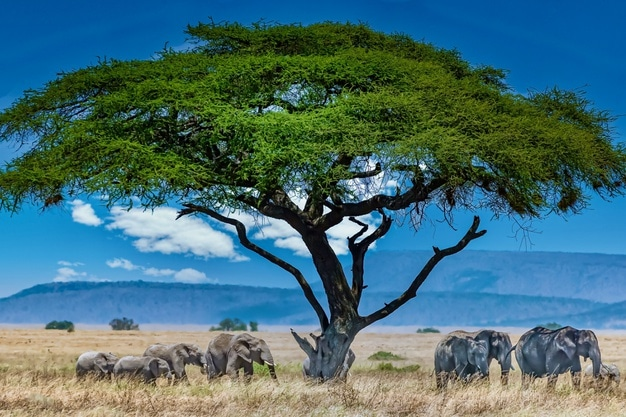 Conseils simples pour un voyage inoubliable vers la sauvage Afrique du Sud